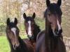 DreierPferdeköpfe