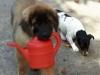 Hund mit Gieskanne