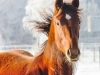 Pferd in der Kälte